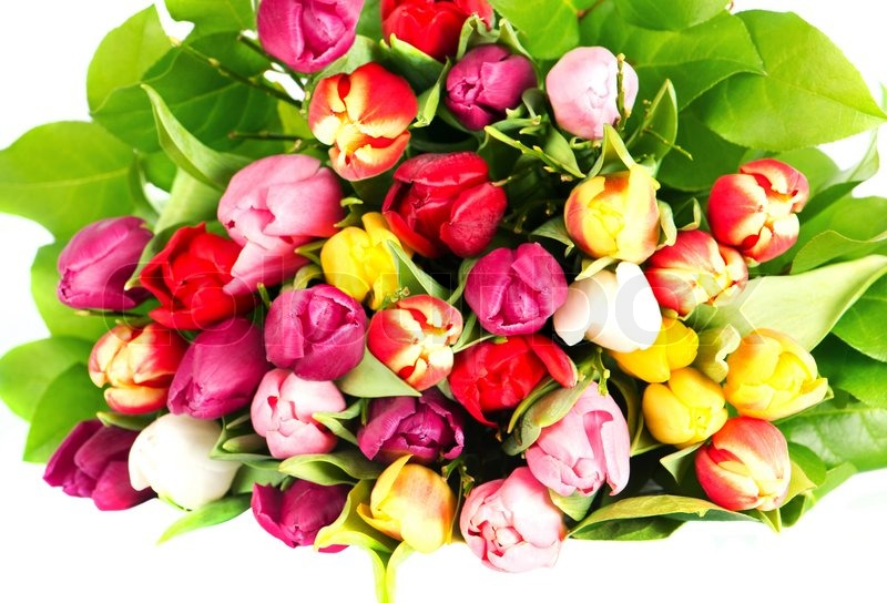 2697056 Colorful Tulips Bouquet Fresh Spring Flowers Department Of